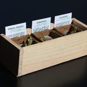 Las hierbas aromáticas crecerán en tu kit autocultivo