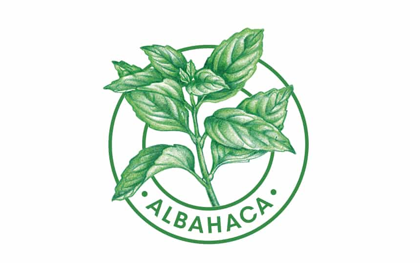 La Albahaca Originaria de asia, cultivada en todo el mundo. la albahaca