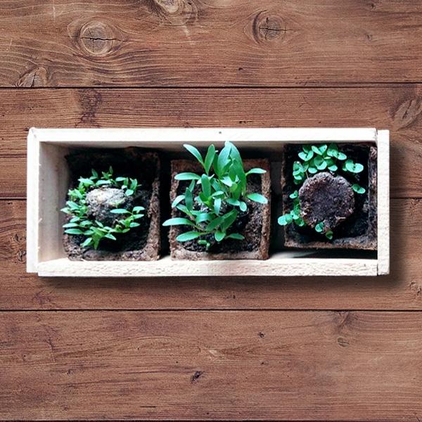 Con las plantas aromáticas decorarás tu hogar