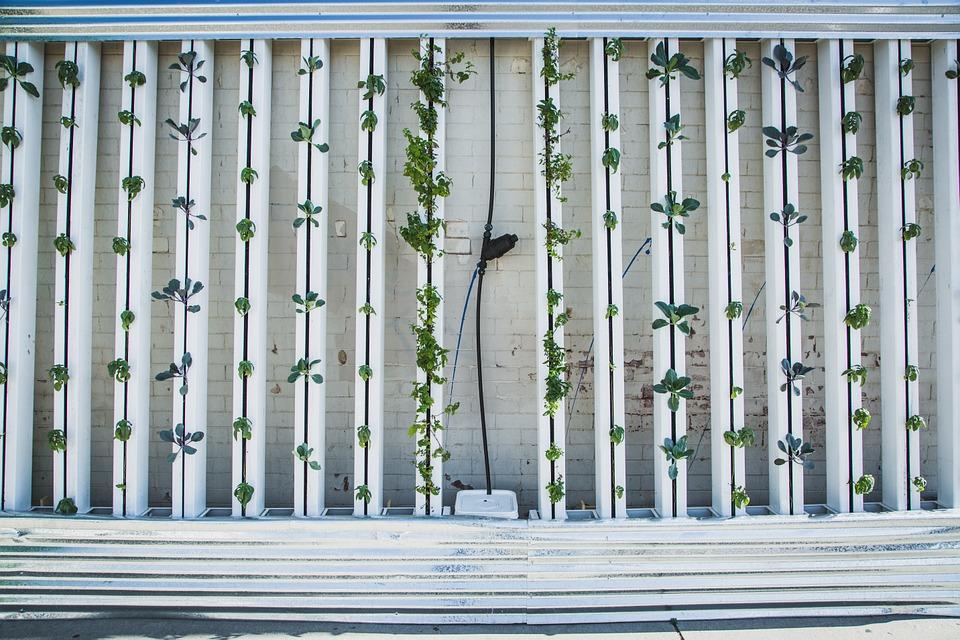 Cultivo hidropónico en vertical