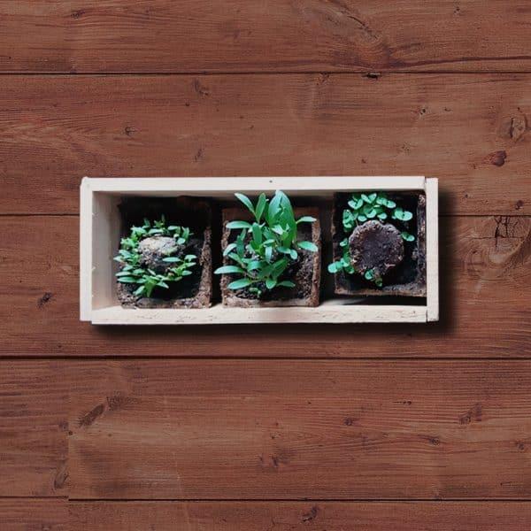 Mini huerto de hierbas aromaticas 4