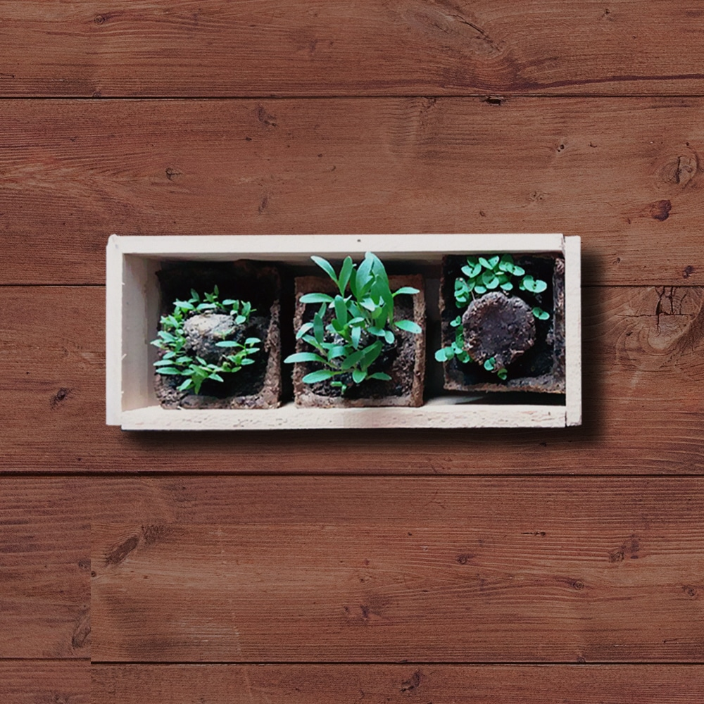 Mini huerto de hierbas arom ticas resetea - Huerto de plantas aromaticas ...