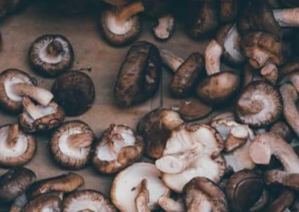 Setas shiitake para comer