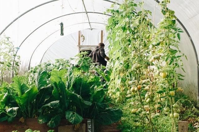 Huerto de verduras para consumo propio