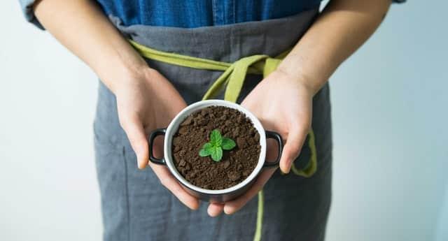 Autocultivo sostenible en casa