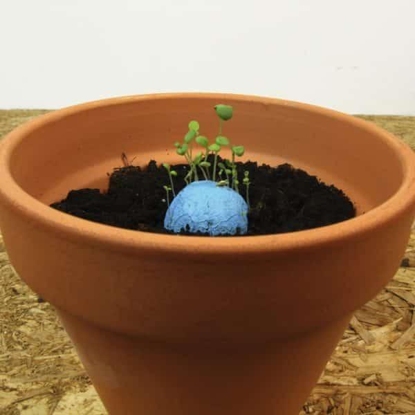 Bombas de semillas 7