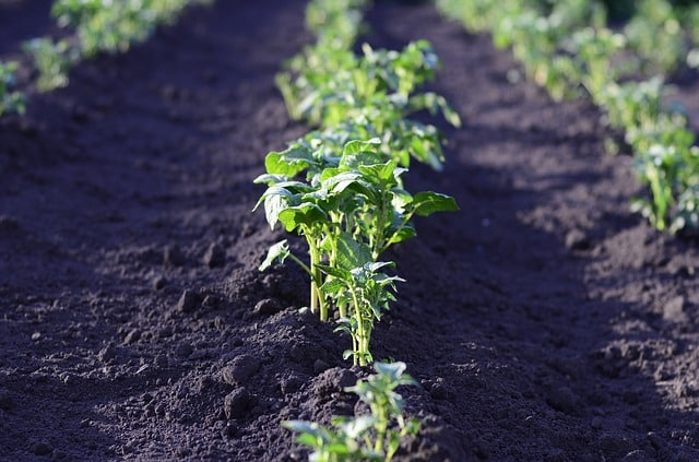 Cultivo de verduras en tierra