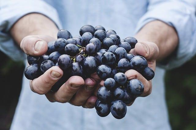 Autocultivo de uvas en finca