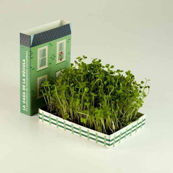 cultivar rucula en casa