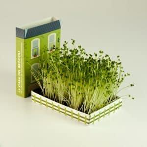 como cultivar brocoli en casa