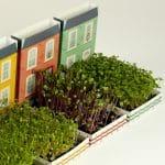Las casas de las microplantas 2 – Resetea