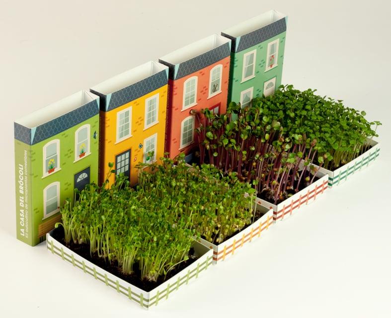 Las casas de las microplantas Germinadas - Resetea
