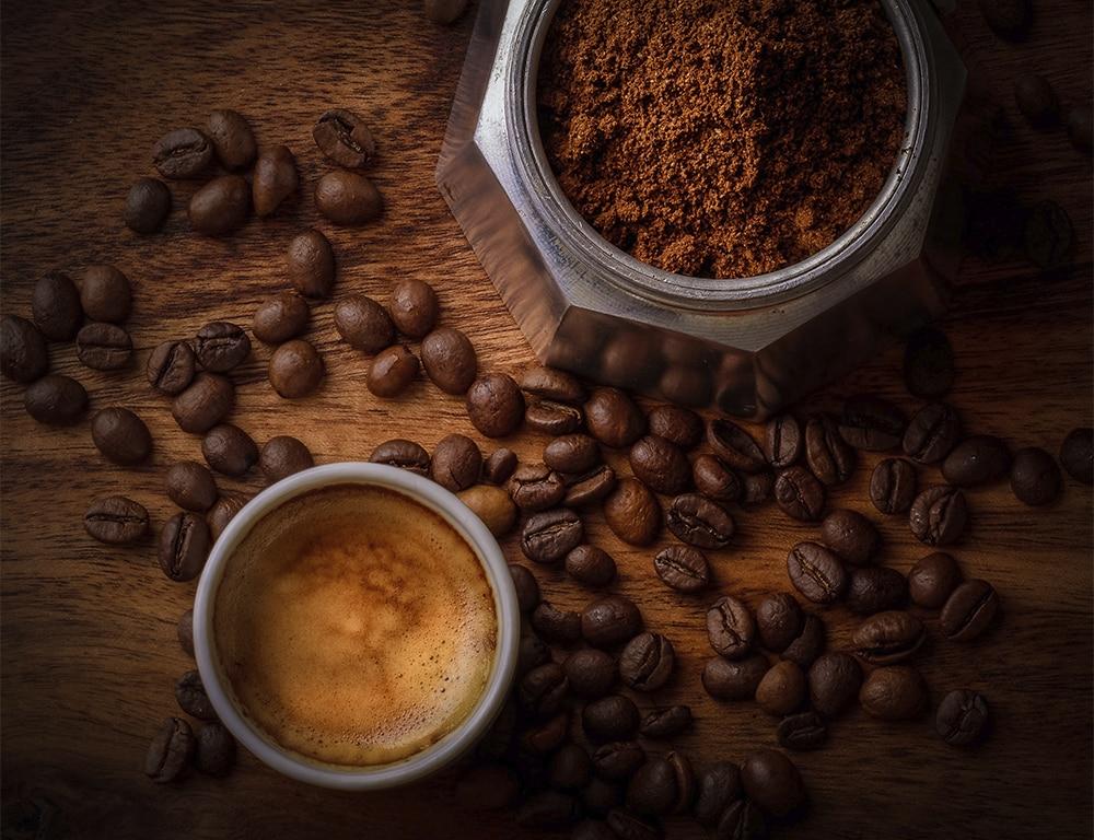 posos de cafe para autocultivo de setas