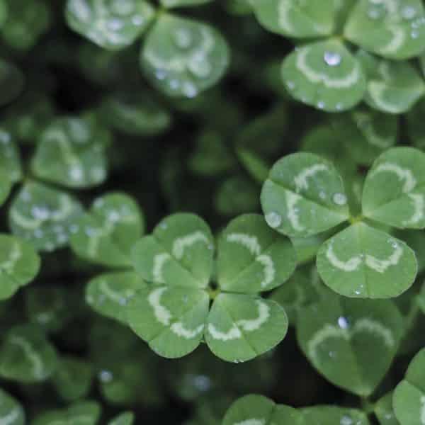 verde resetea