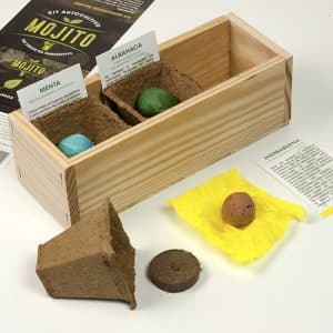 ingredintes de mojito para cultivar en casa