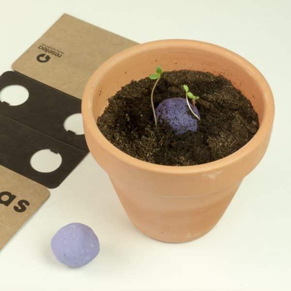 plantas y flores resetea