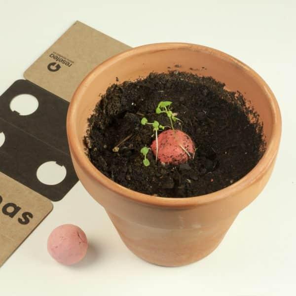 resetea semillas comprar