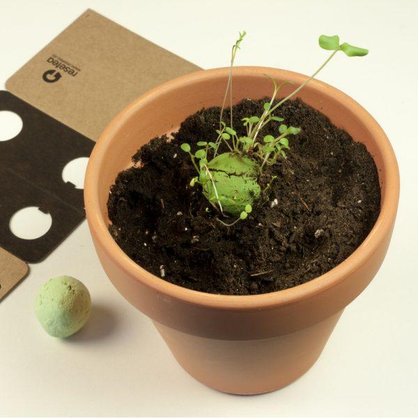 facil cultivo en casa resetea