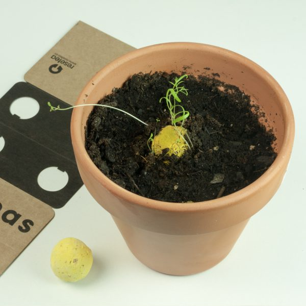 resetea bombas de semillas