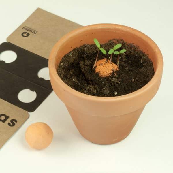 cultivos ecologicos domesticos