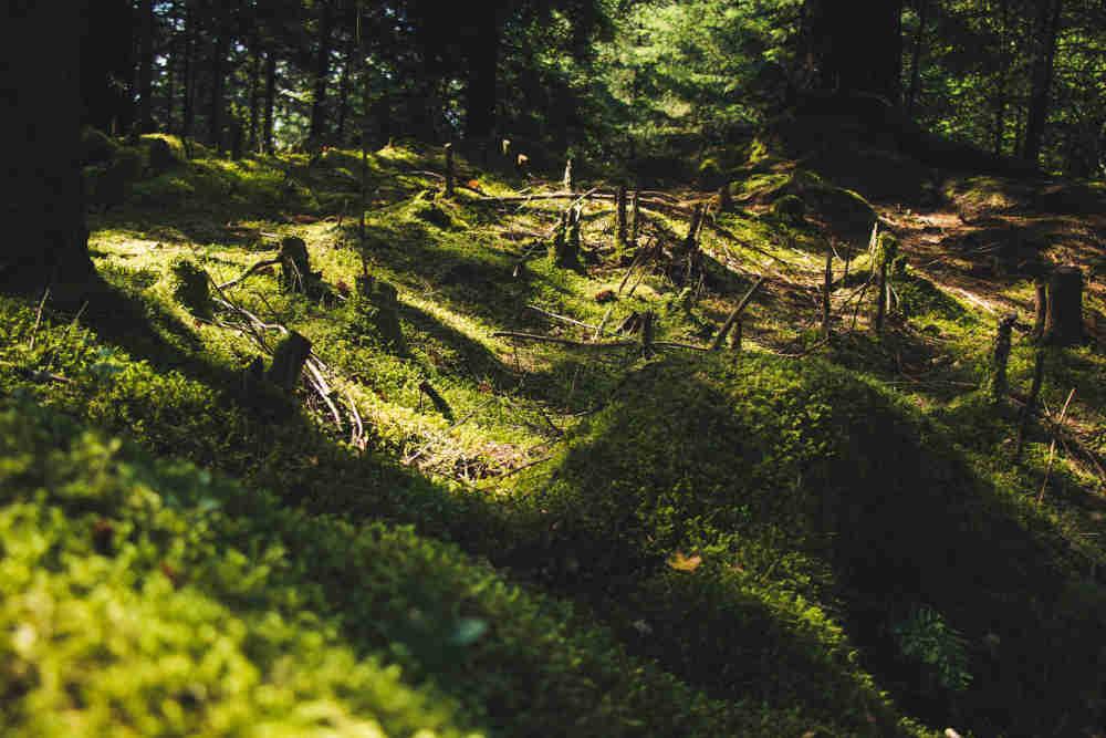 problema de deforestacion
